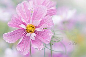 les fleurs de bach catalyseurs équilibrant l'organisme