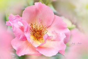 les fleurs de bach un remede naturel sans danger et efficace
